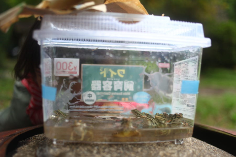 カエルがいっぱい