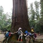 大木を囲む