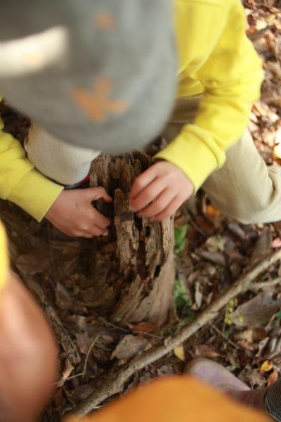 木の中を探す