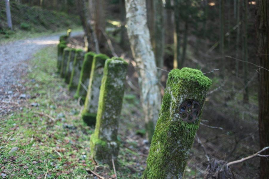 苔むした柱