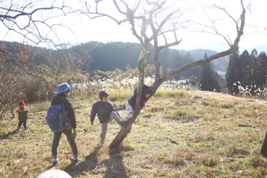 木登りを手伝う
