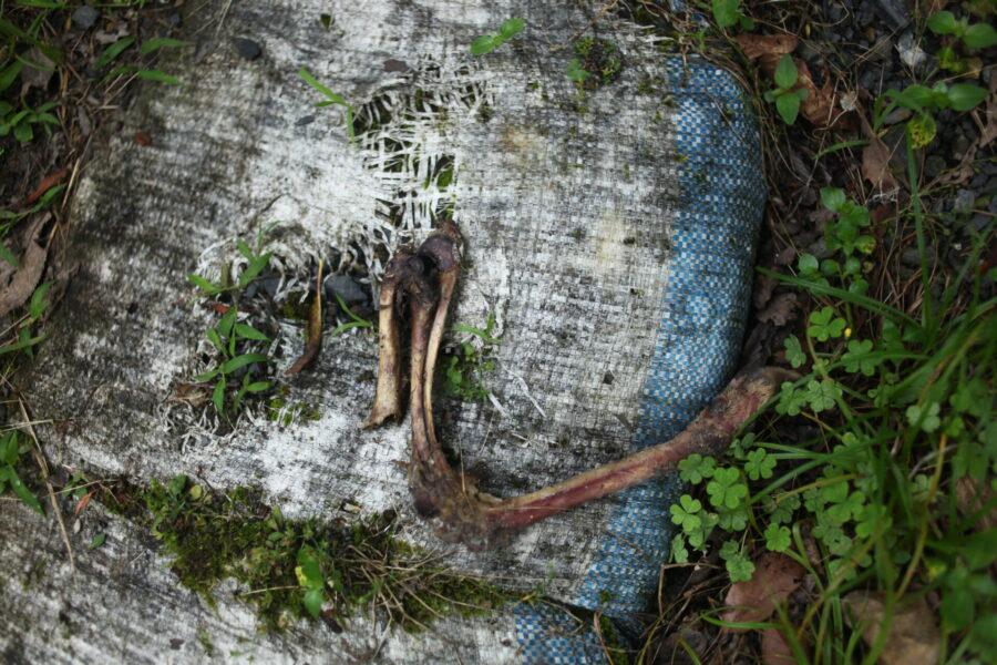 鹿の足の骨