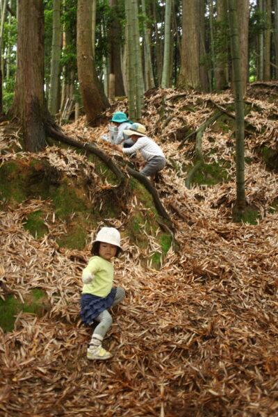 竹の落ち葉