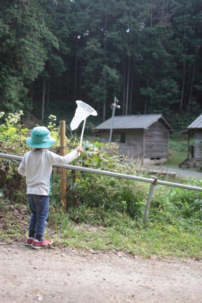 蝶々を捕まえる